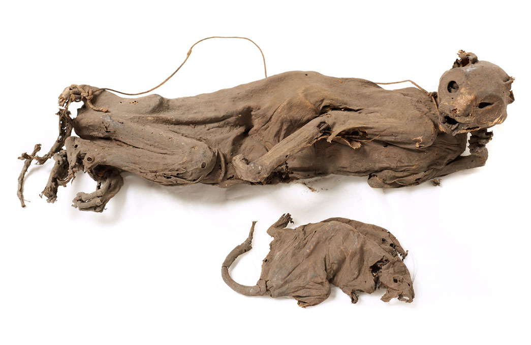 Mummified cat and rat found at the London Docks in 1890.