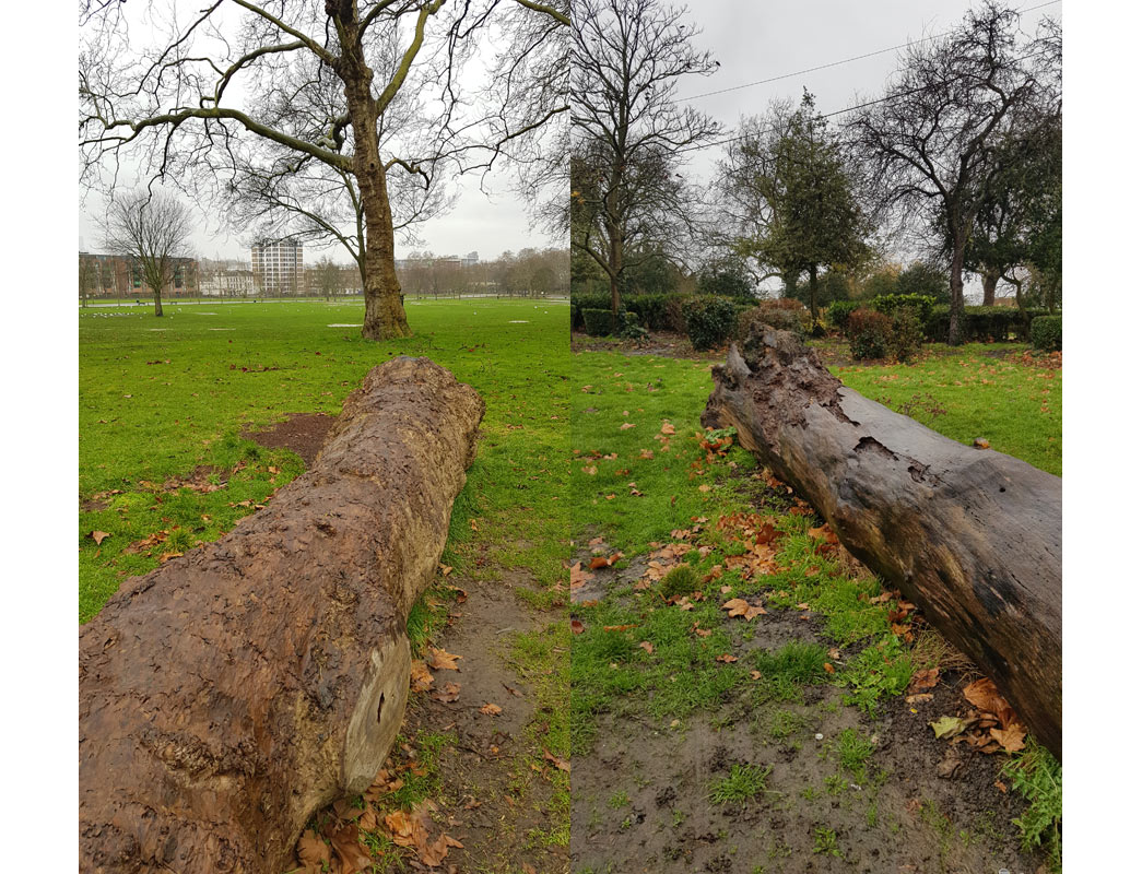 Two logs in Finsbury Park