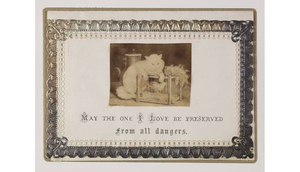 Velentine's card featuring embossed and silvered lace paper border onto which has been mounted an image of a cat taunting a caged bird.