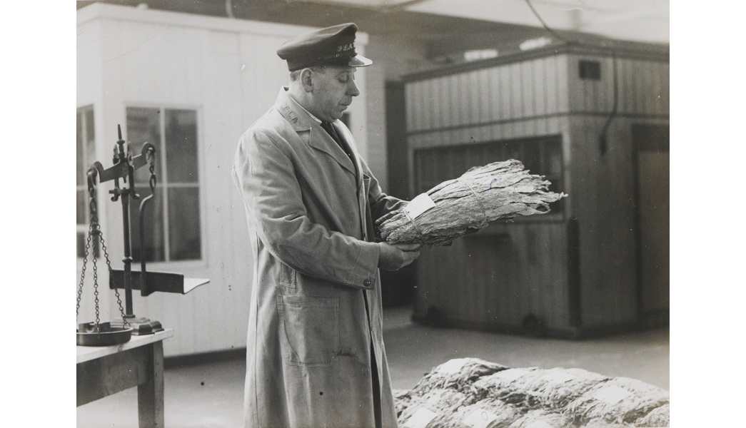 Inspecting tobacco at the London Docks.