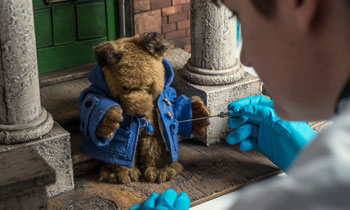 Paddington Bear being conserved