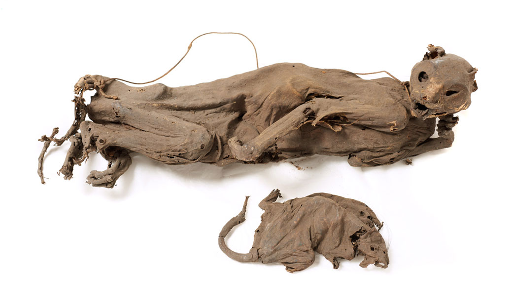 A cat and rat found entombed in a London sugar warehouse.