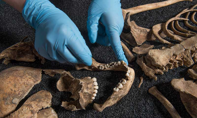 Are your pupils ready to become osteologists (bone scientists)?