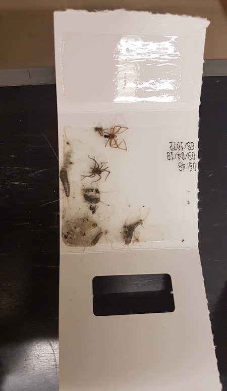 A glue trap helping to keep the museum collection safe.