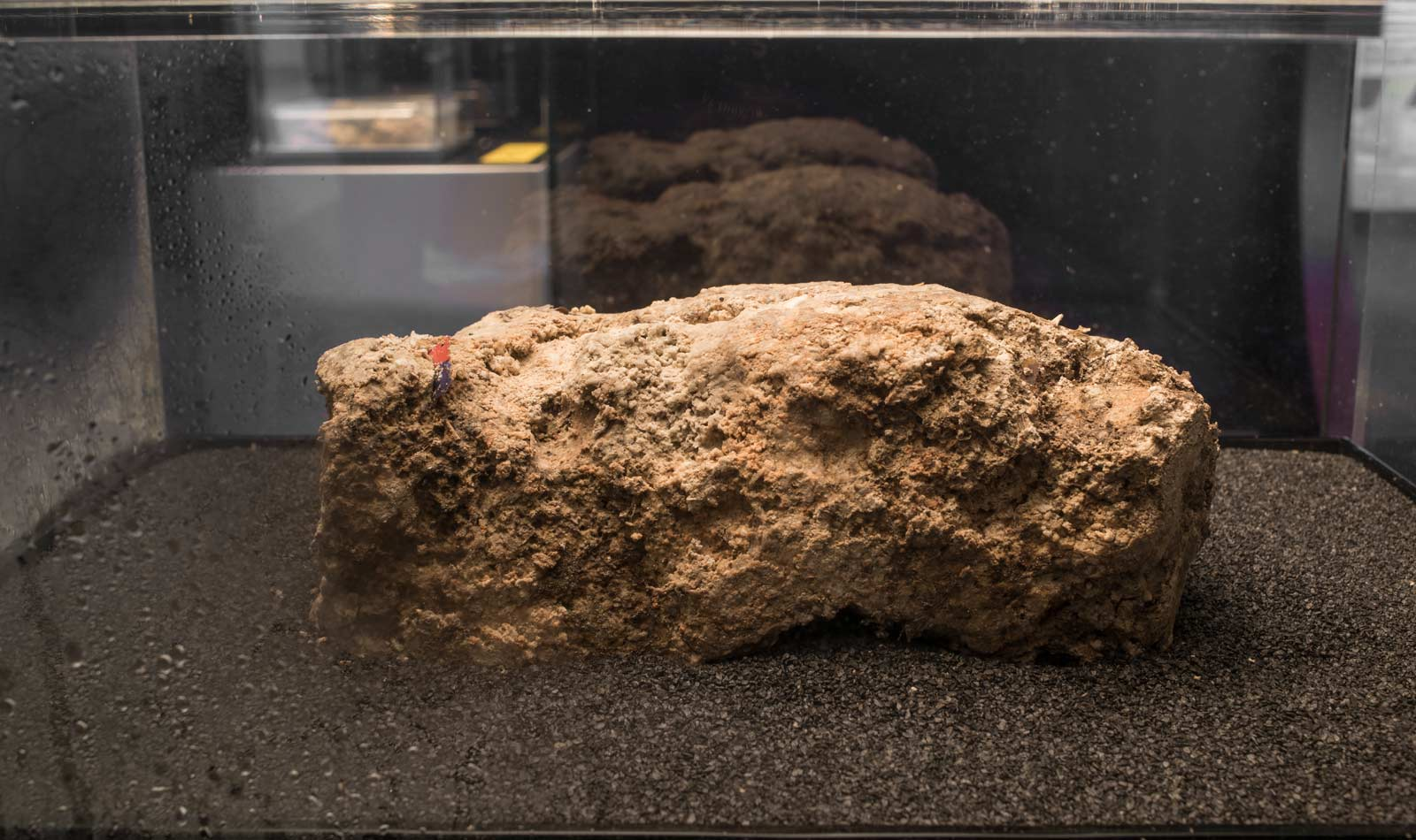 Fatberg is on display in the galleries.