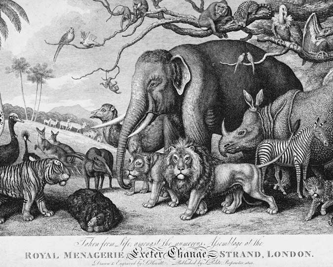 An engraving depicting animals from the Royal Menagerie at Exeter Change in the Strand. Included are an elephant, a rhinoceros, a zebra, leopards, lions, tigers, monkeys, kangaroos, a sloth, an emu, and a camel.