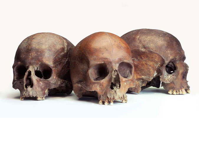 Group of three Roman skulls.