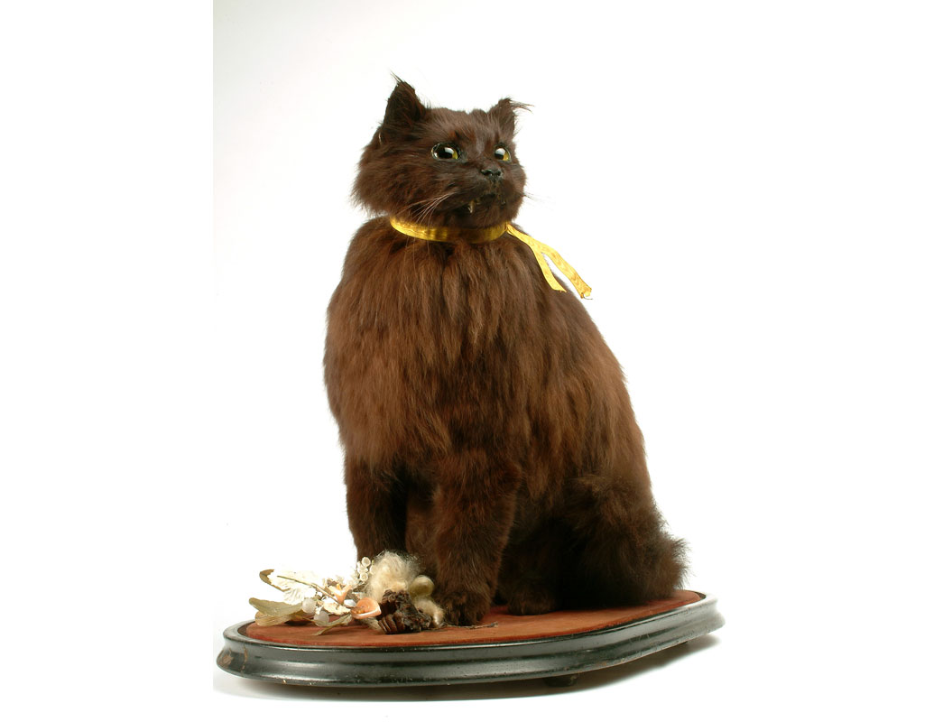 Black cat named Oliver. The cat is preserved in a seated position, with a yellow ribbon around its neck and glass eyes. It is contained under a glass dome with an oval wooden base. Also in the dome is a small silver slipper and the remains of a floral bouquet, now badly decomposed