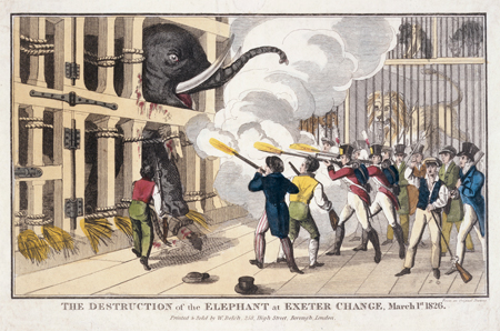 rom the 1770s, Exeter Change in the Strand was occupied by a succession of showmen who dealt in 'foreign birds and beasts'. Edward Cross's exhibit of Chunee the elephant was a star attraction for many years. At times Chunee famously became irritable, probably due to frustration at being confined to such a small cage.