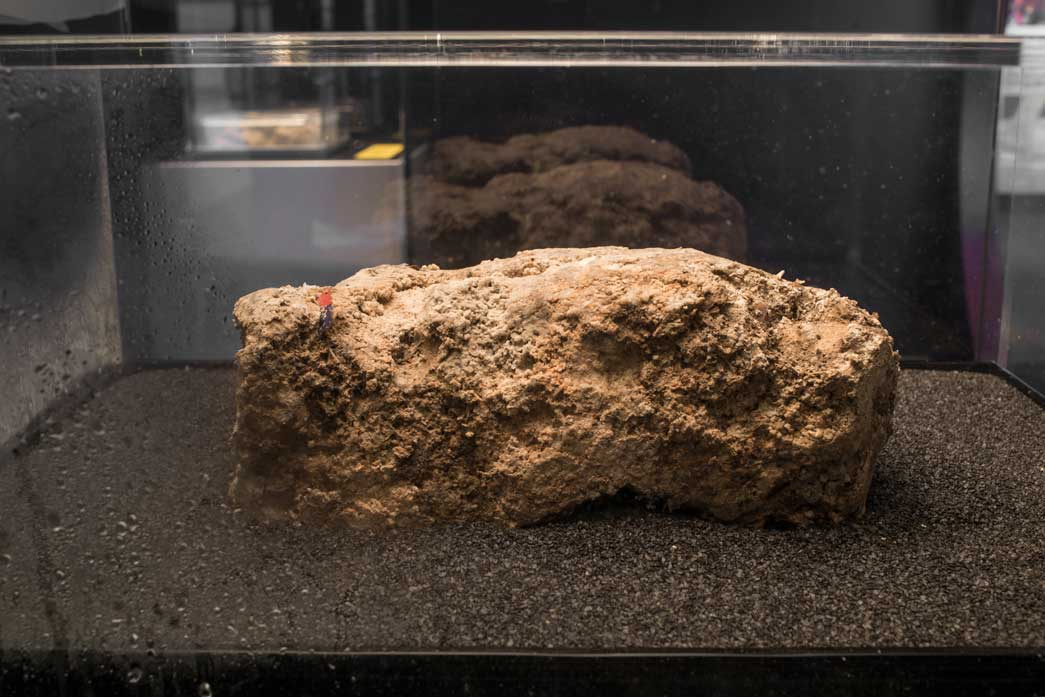 Samples of fatberg in the Museum of London's Fatberg! exhibition.