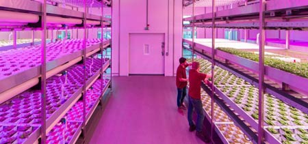GrowUp vertical farms