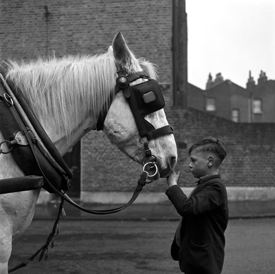 Young boy and horse, London c.1953, copyright Frederick J. Wilfred