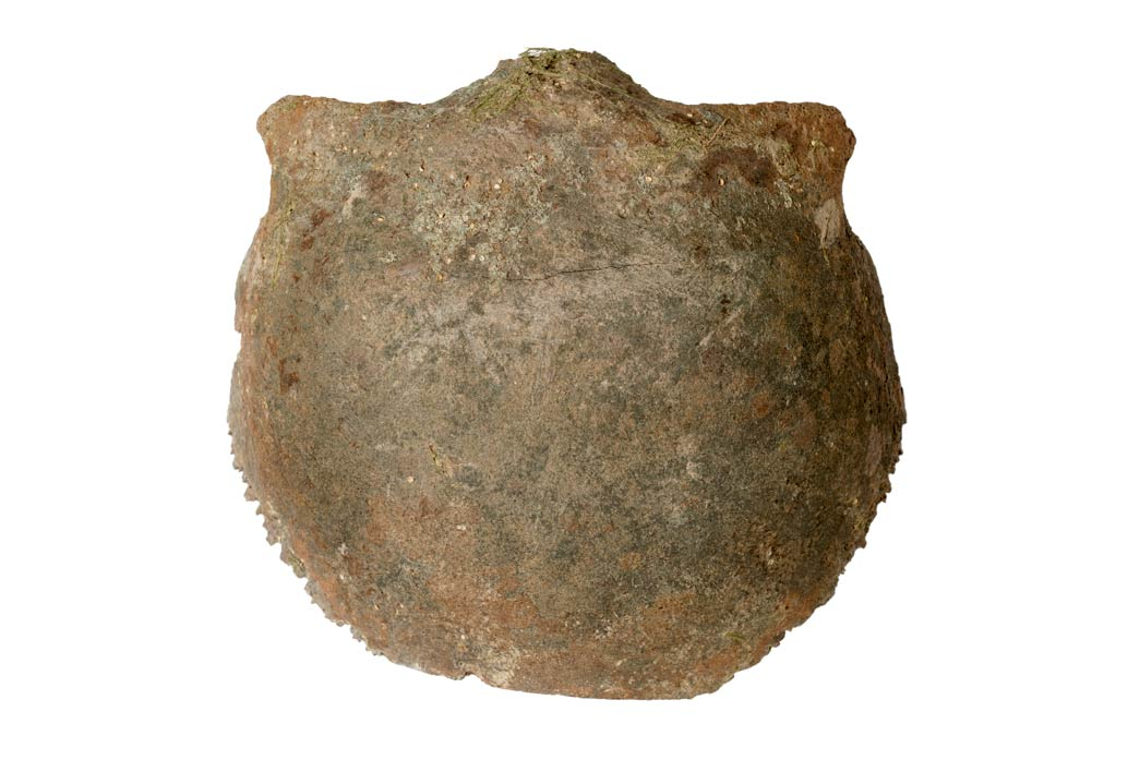 The frontal bone of a Neolithic skull found in the River Thames.