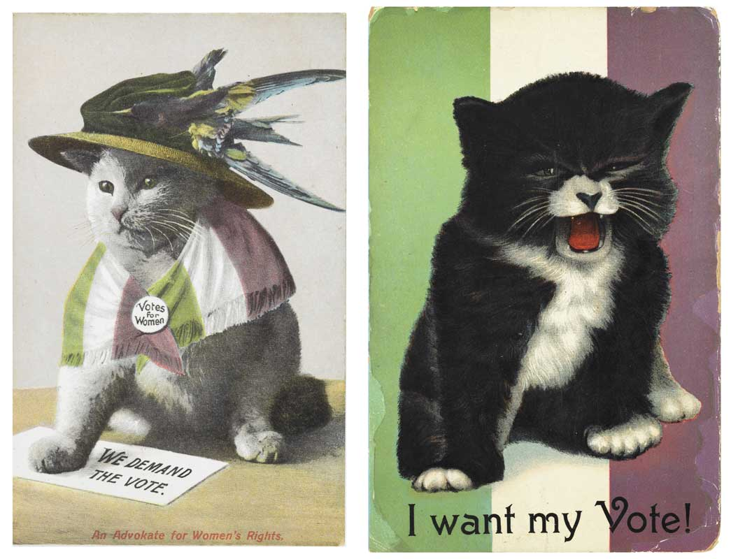 'An Advokate for Women's Rights', a commercially produced picture postcard of a cat dressed as a Suffragette satirising the Suffragette campaign.