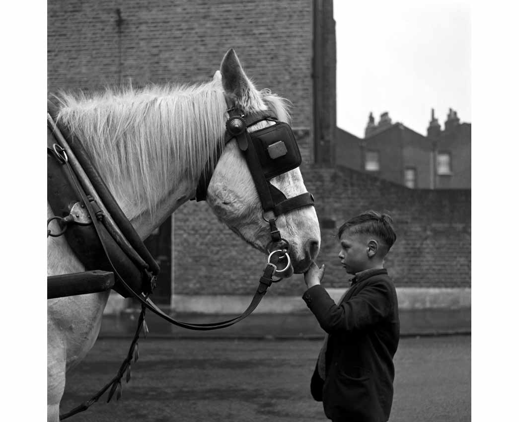 A young boy strokes the nose of a horse standing in harness in the street.