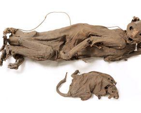 Mummified cat found in a London dock warehouse.